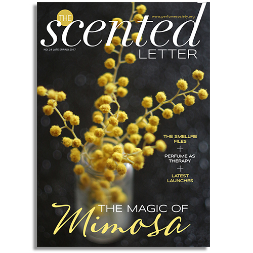 The Scented Letter 'The Magic of Mimosa' (Print Edition)