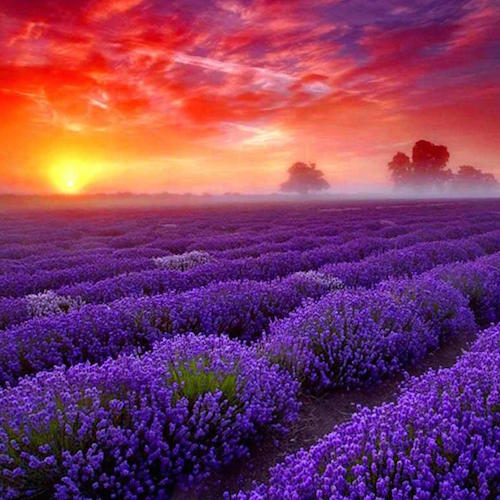 Lavender Perfumes To Fall In Love With