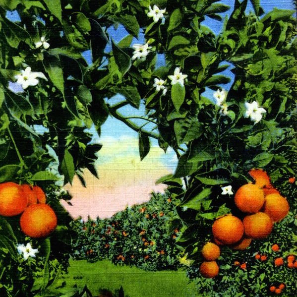 Oranges are not the only (fragrant) fruit…