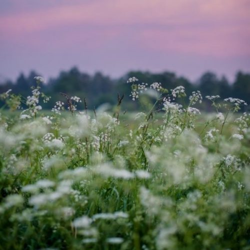 Forage – Stop to smell the flowers… then eat them, too?