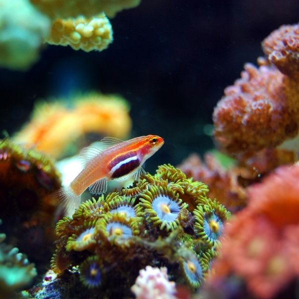 Wake up and smell the coral – and climate change?