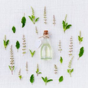 Why do essential oils exist? Scientists discover plants detect insect attacks by 'sniffing' each other