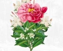 Forgot the card? Panic over, as Penhaligon's invite you to create a virtual Valentine's bouquet!