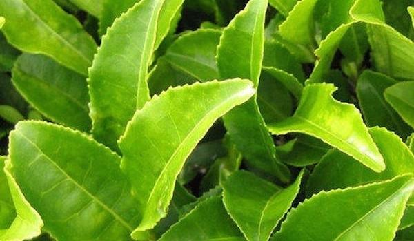 'Afternoon Tea Week – celebrate in scent!'