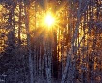5 fragrances that guarantee winter sunshine…